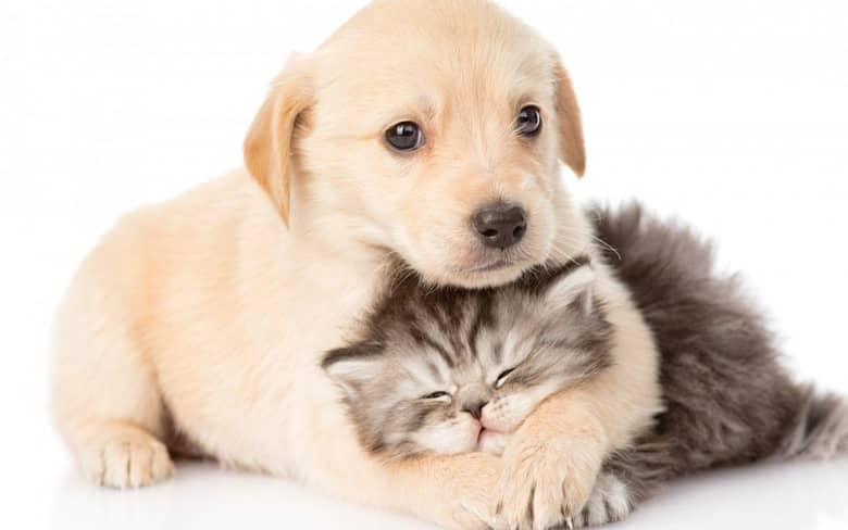 Cute dog and cat friends
