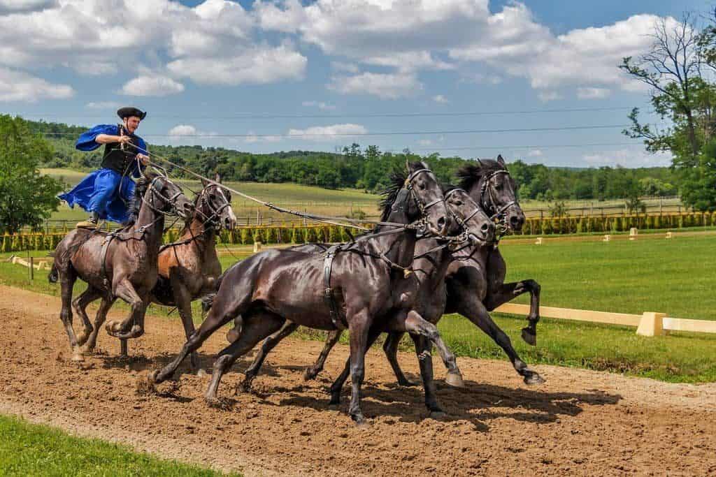 Csikós horse riding