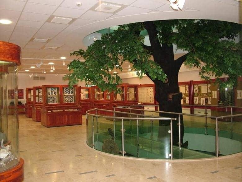 oak in matra museum