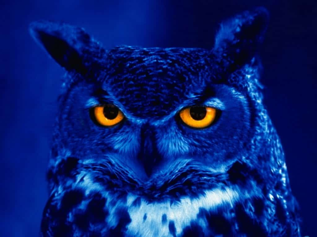Call of the wild - Budakeszi Wildlife Park-Night Owl