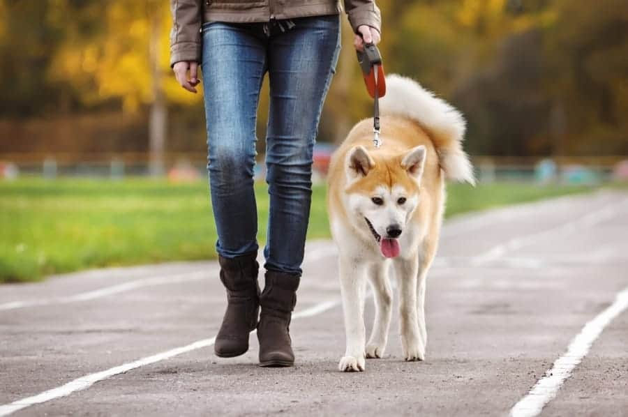 Walking the dogs from the shelter-Girl walking with a dog