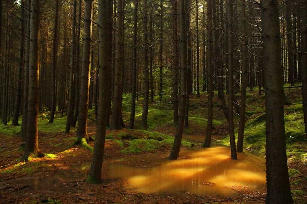 The gold of the Orség-Why it is worth visiting her